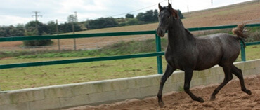Horses for-sale| Yeguada la B