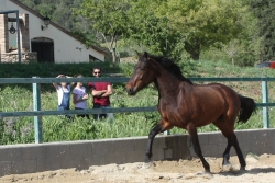 Pre horses for sale - Messi de la B