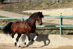 Horses for sale - Intruso de la B