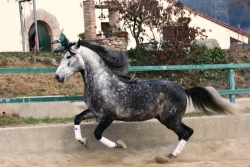 Horses for sale - Laurel de la b