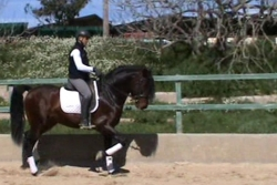 Pre horses for sale - Marinero de la B