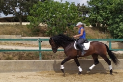 Andalusian horses for sale - Nadal de la B