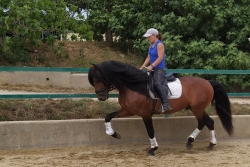 Andalusian horses for sale - Norte de la B