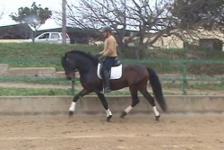 Andalusian horses for sale - Obus de la B
